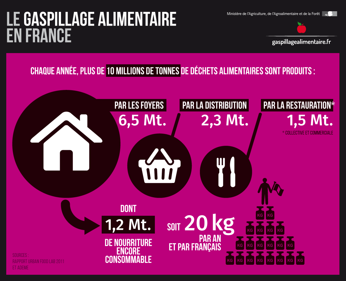 Infographie - Le gaspillage alimentaire en France